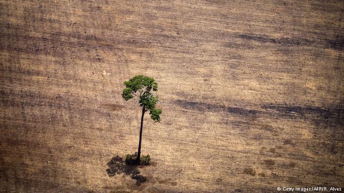 Mais de 15 mil cientistas fazem alerta sobre o meio ambiente.
